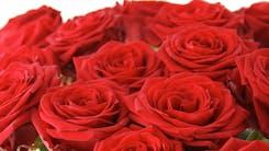 Valentine's Roses & Flowers