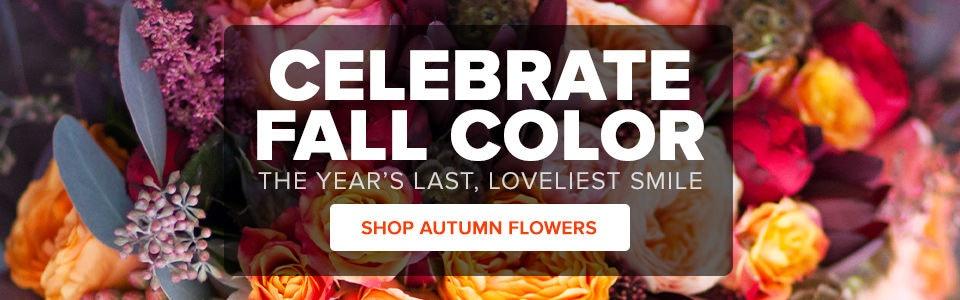 Louisville Kentucky Flowers And Flower Shop