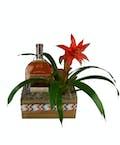 Bromeliad & Bourbon