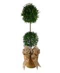 Eugenia Plant Topiary