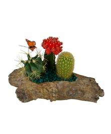 Log Cactus Garden