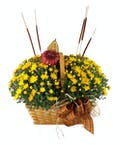 Magnificent Mums Fall Basket