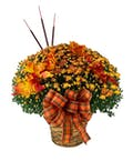 Hardy Mum with Fall Accents