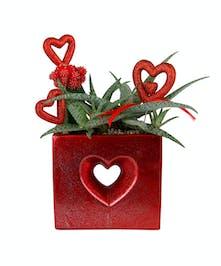 Open Hearts Succulent Garden