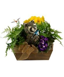 Raccoon's Refuge Plant Garden