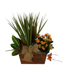 Scenic Summer Plant Garden