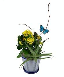 Succulent Beauty Combo