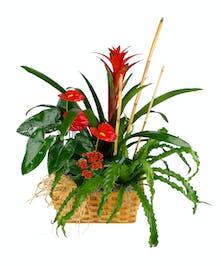 Gorgeous tropical plants!