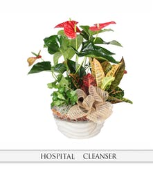 Euro Garden with Anthurium