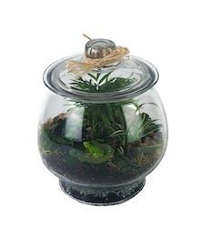 Healthy Air Water & Soil Terrarium