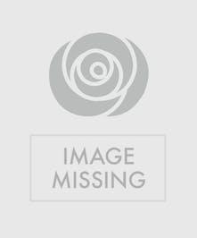 Mint Julep Roses
