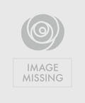 Orchid Plant with Sonoma Cutrer Pinot