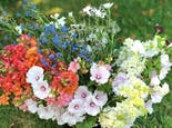 A lovely spread of orange, blue, white and yellow wildflowers