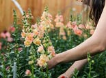 An off-screen helper picks an armful of fresh orange flowers